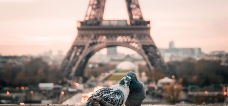 two pigeons cuddling with the Eiffel Tower in the distance