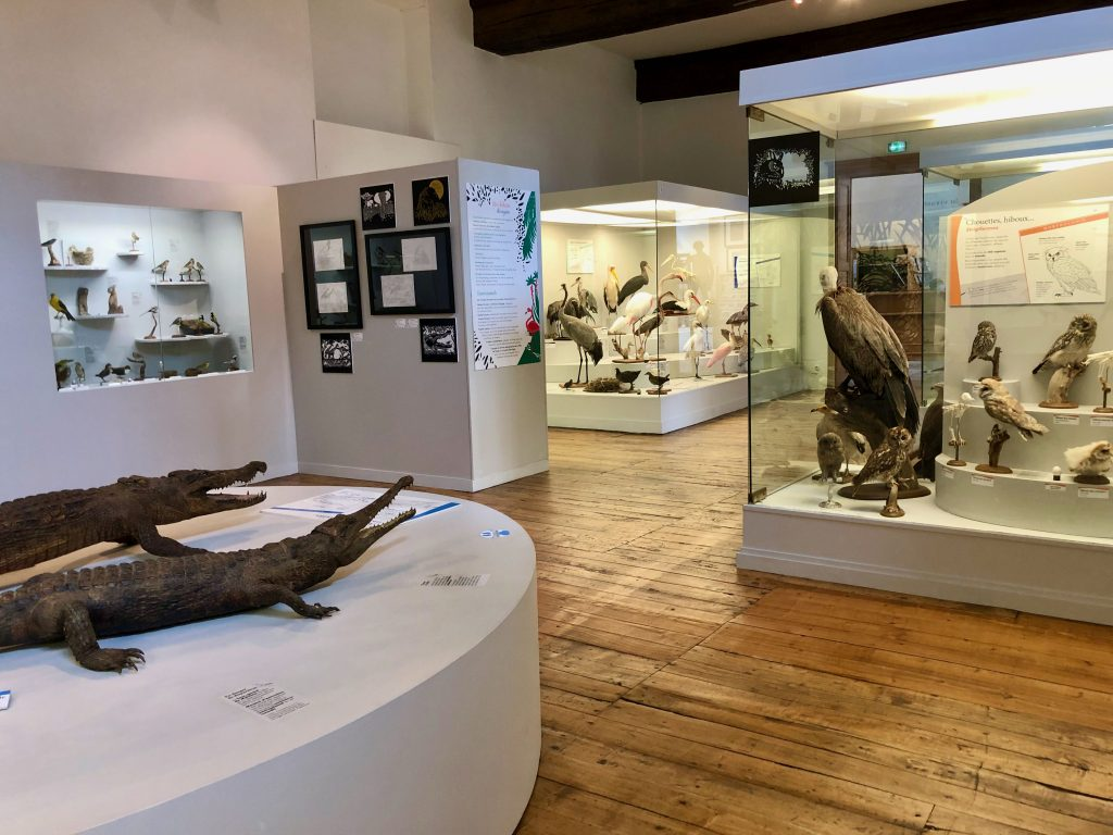 inside the Musée Saint Loup in Troyes (France), birds and reptiles on display